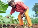 Seagro e Cedrus ampliam ações para expandir extensão rural no Estado
